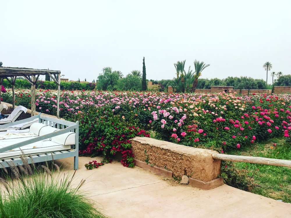 The rose garden and daybeds at Beldi Country Club are definitely worth a visit.