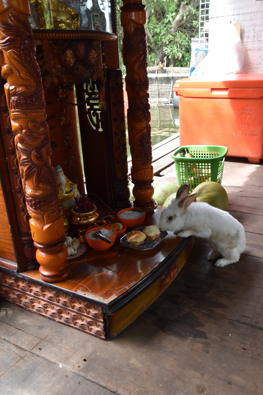 This bunny was helping himself to the offerings on the altar
