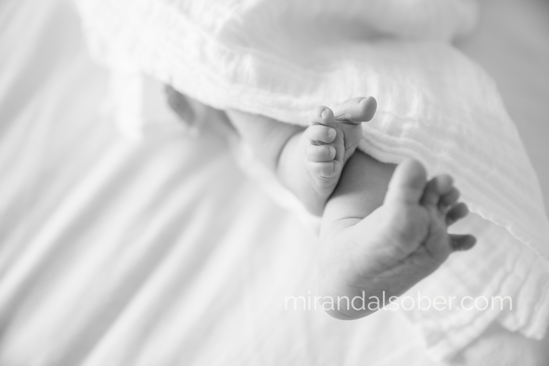 Fort Collins lifestyle newborn photographer, Miranda L. Sober