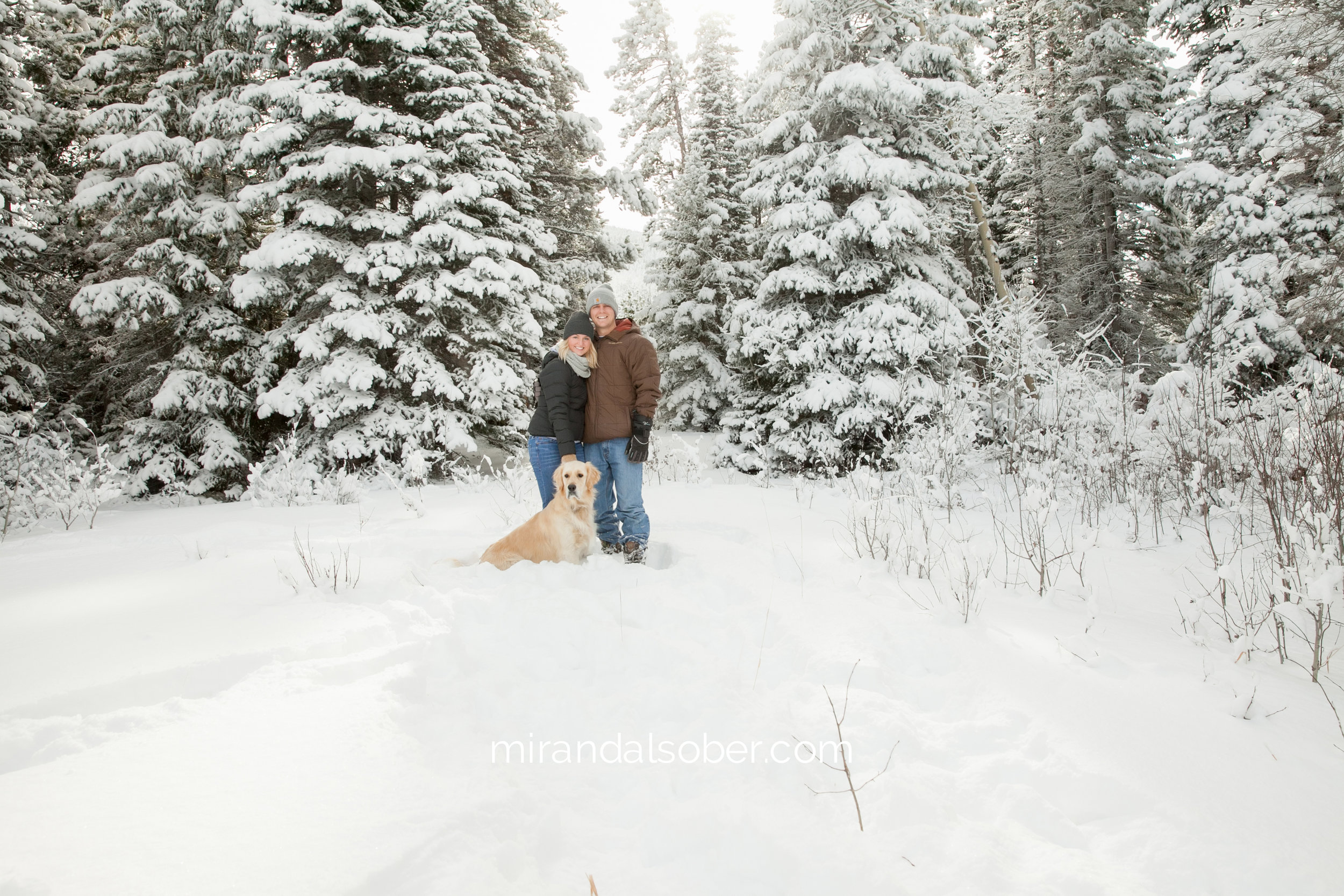 Fort Collins lifestyle photographer, personal blog post, Our Christmas Tree