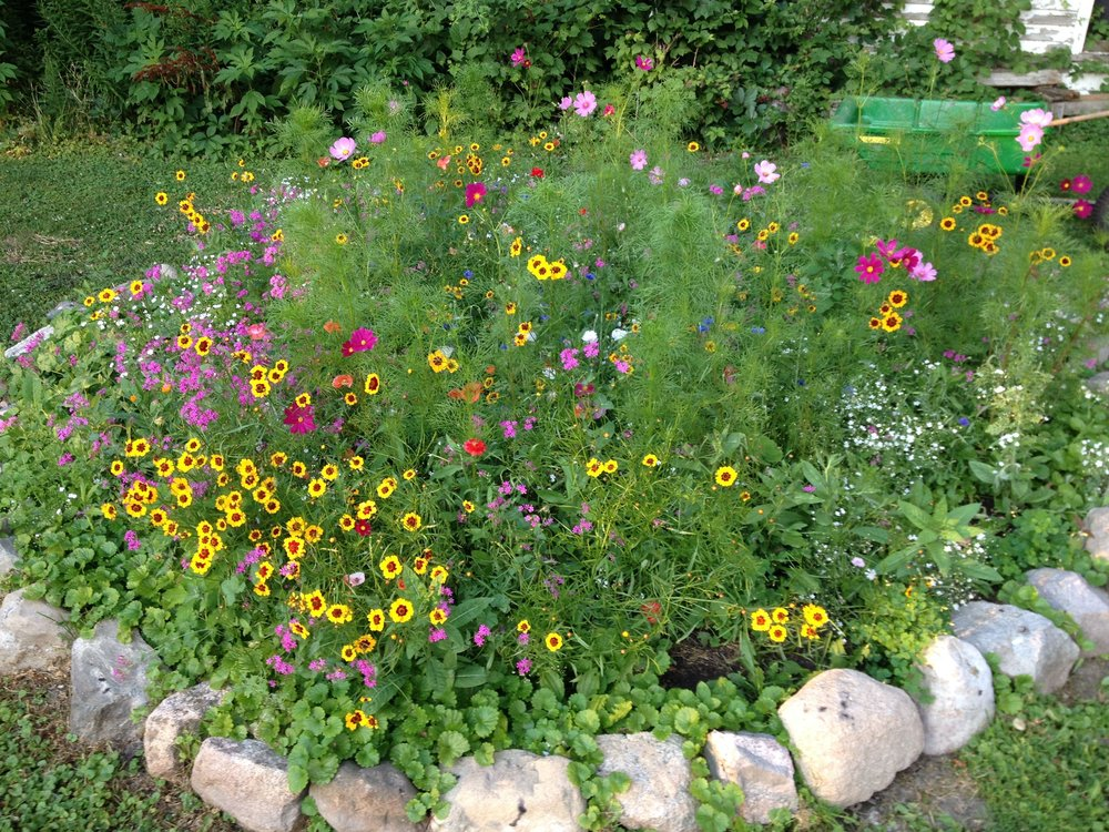 wildflower garden - Wildflower Garden