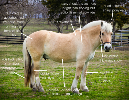 Ridefest horses - anatomy.png
