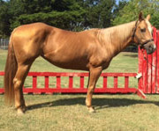 Equest Therapy Horse Tinkerbell is a Palomino