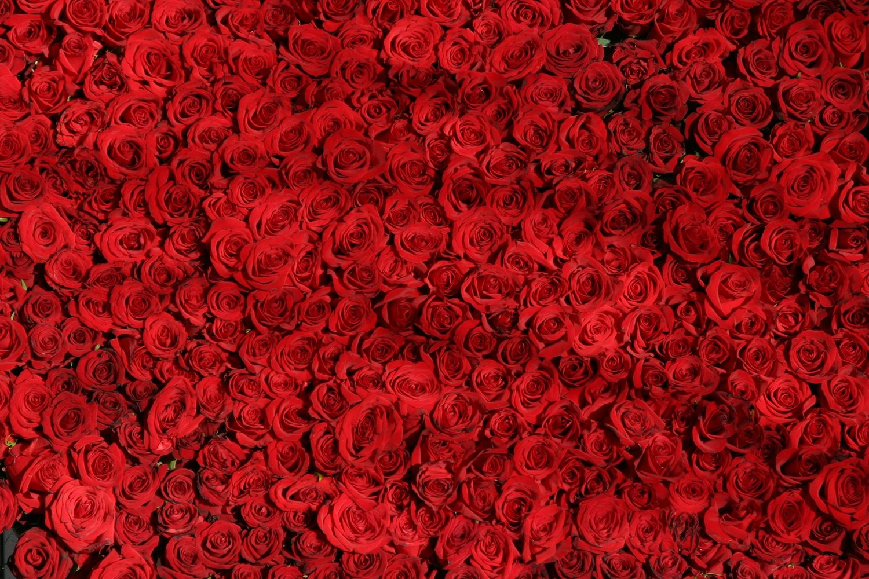 Valentines Day — Warriors Of The Ruwach