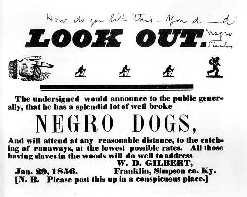 negro dogs.jpg