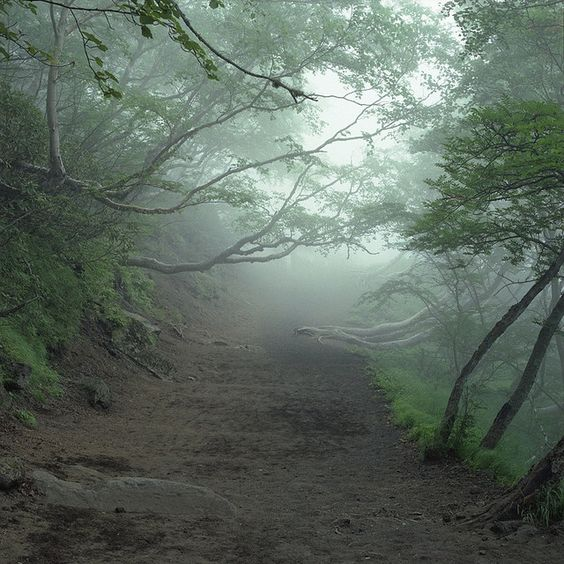 Aokigahara Forest, Japan. {Image borrowed from Pinterest}