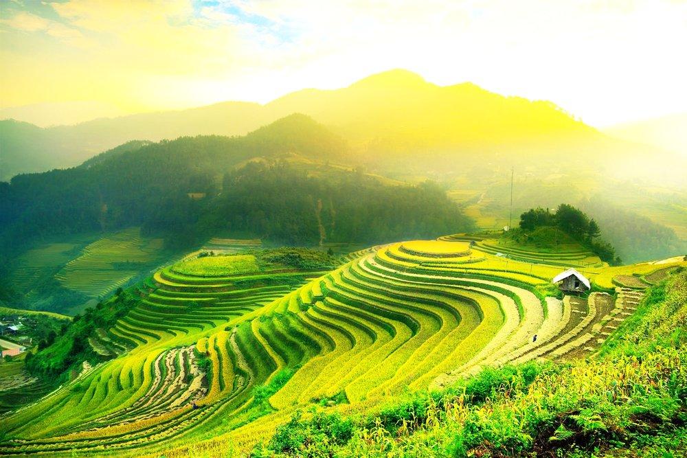 Balinese-rice-fields.jpg