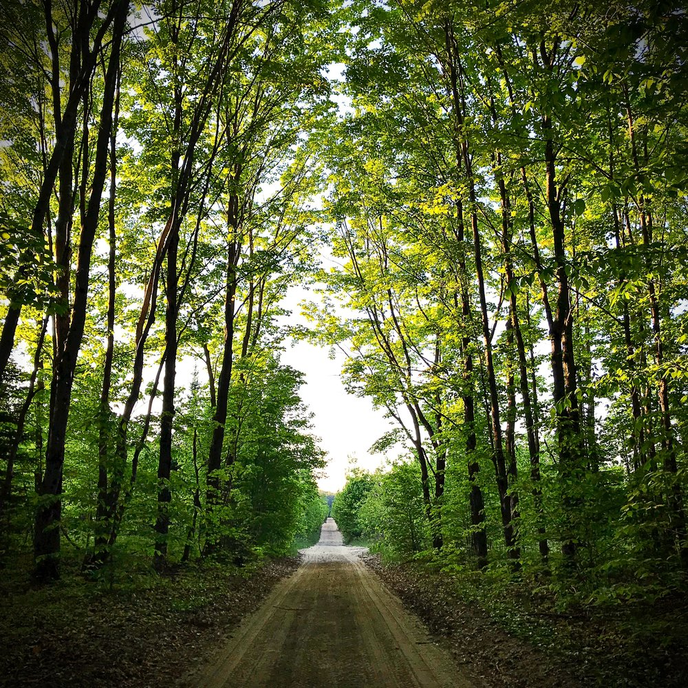 A sandy forest road in Gaylord State Forest, MI. (c) Erika Galentin