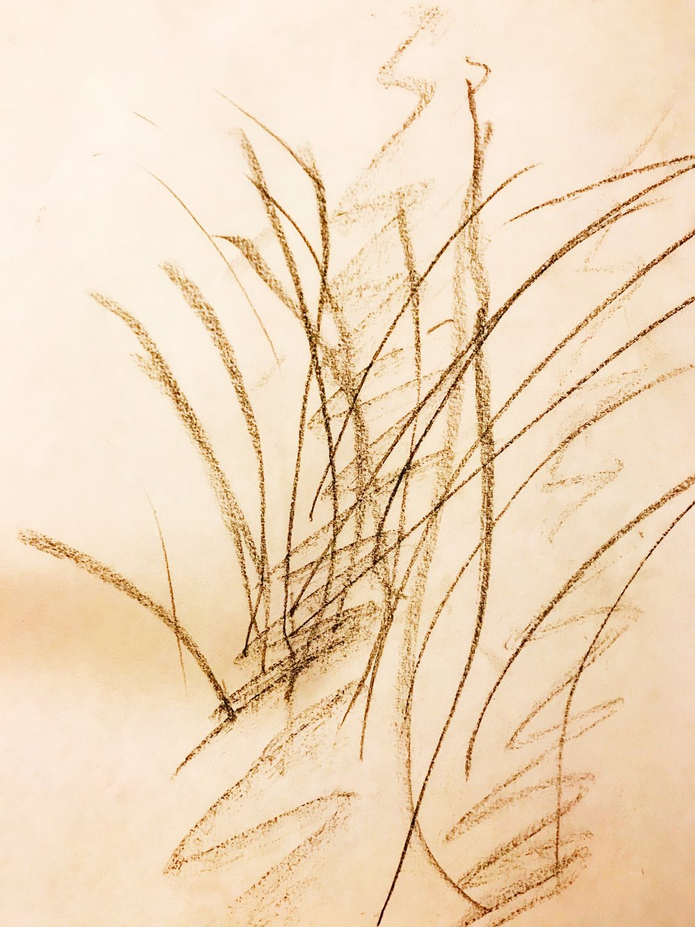 Seeing in Beholding. Drawing expression of the plant with eyes closed. - Erika