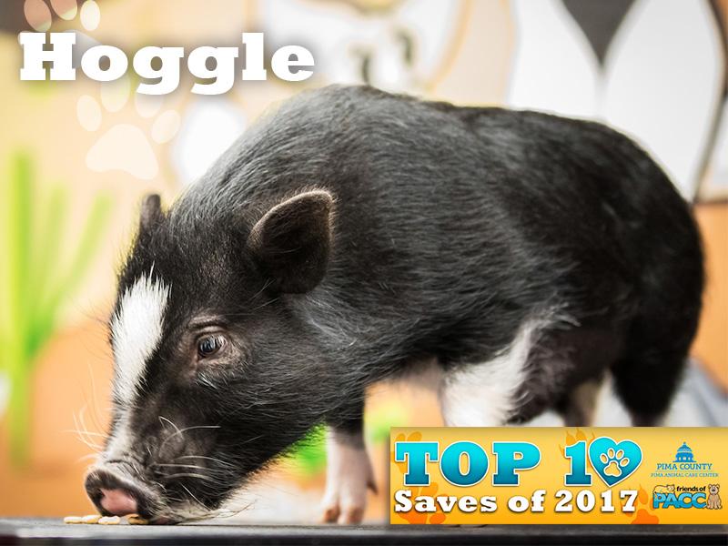 Hoggie