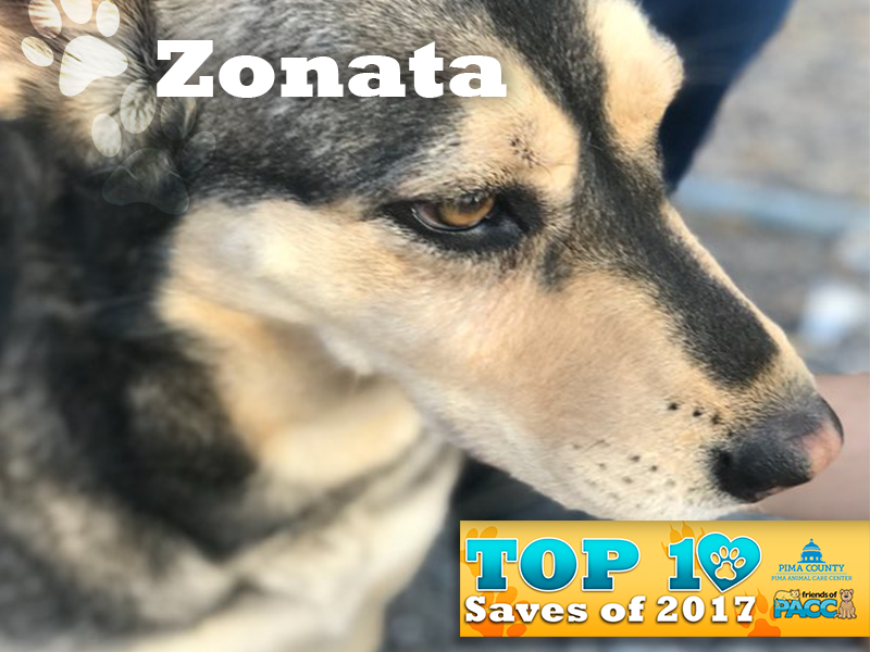 fo_PACC17_1000 Ten Best_Saves-Zonata.png