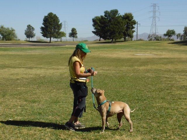 AJ in TOP Dog Training