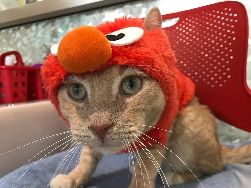 """Third Place:  Elmo as """"Tickle Me Elmo""""!"""""""