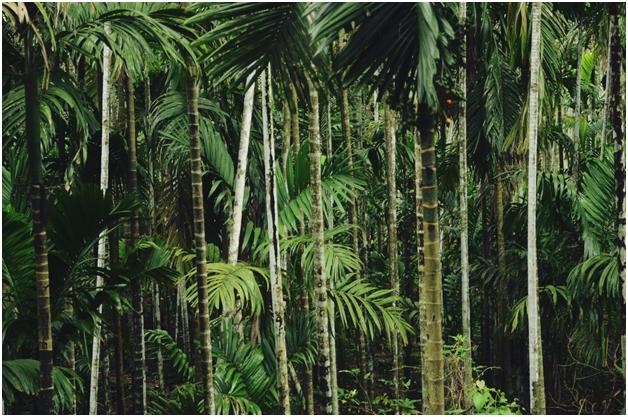 teak forest.png