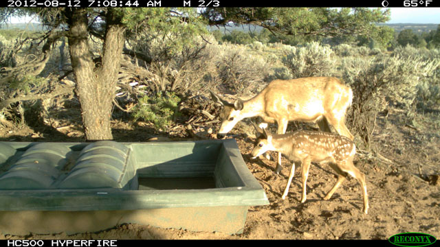 Two Deer Drinking from Guzzler