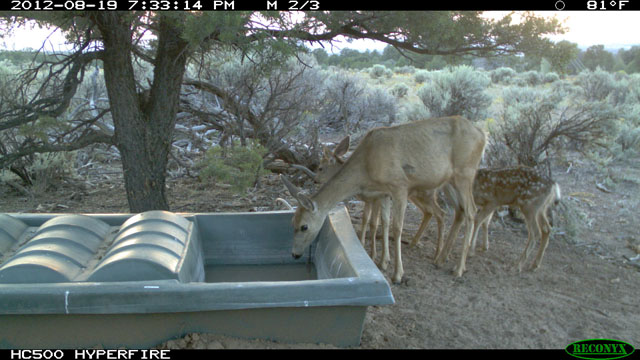 Deer at Water Guzzler