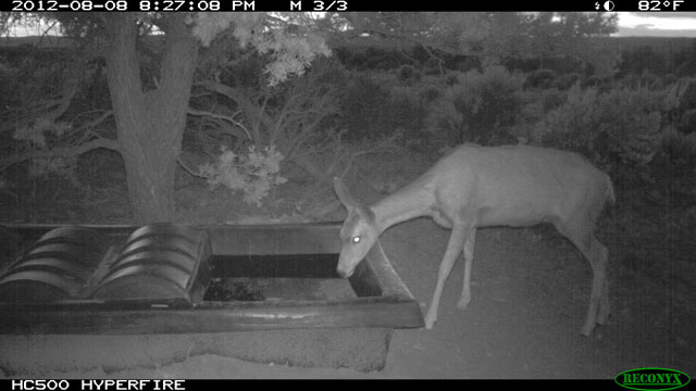 Deer at Wildlife Water Guzzler