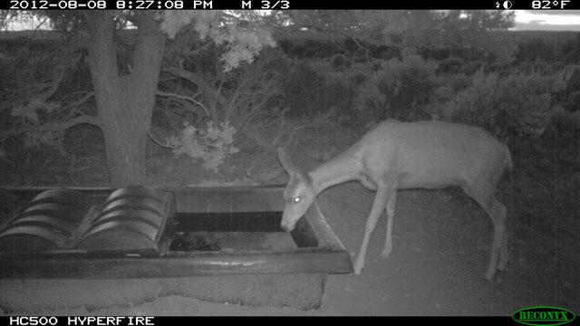 SP-UT-Deer-4.jpg