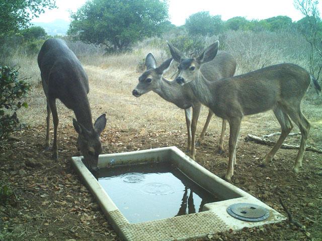 SP-Elkhorn Deer.jpg