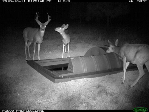 LosAlamos-deer2-500.jpg