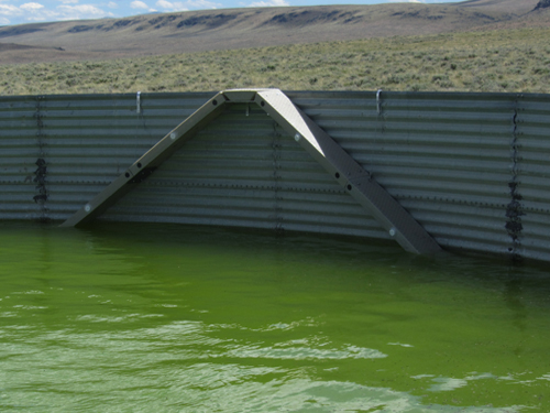 Idaho Water Tank With Wildlife Escape Ramps