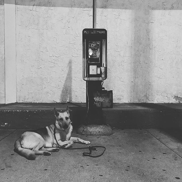 Late night walk post practice. Really excited for our show on Friday at the Garage Bar in Ventura. Cozmo chillin next to a classic broken pay phone. #dogsofinstgram #artsy #lalife
