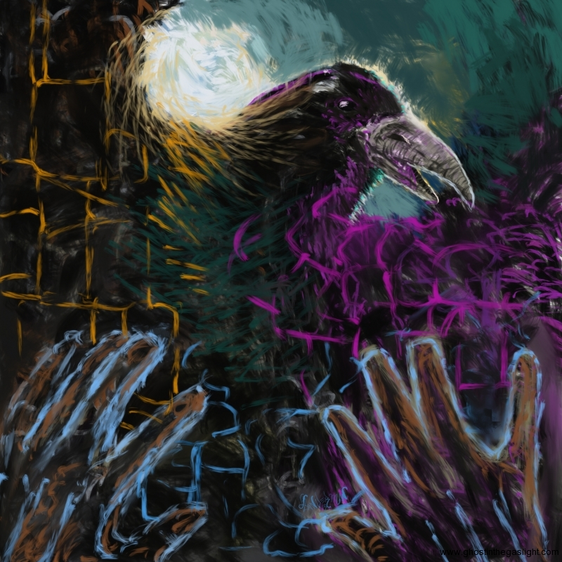 corvus-bird