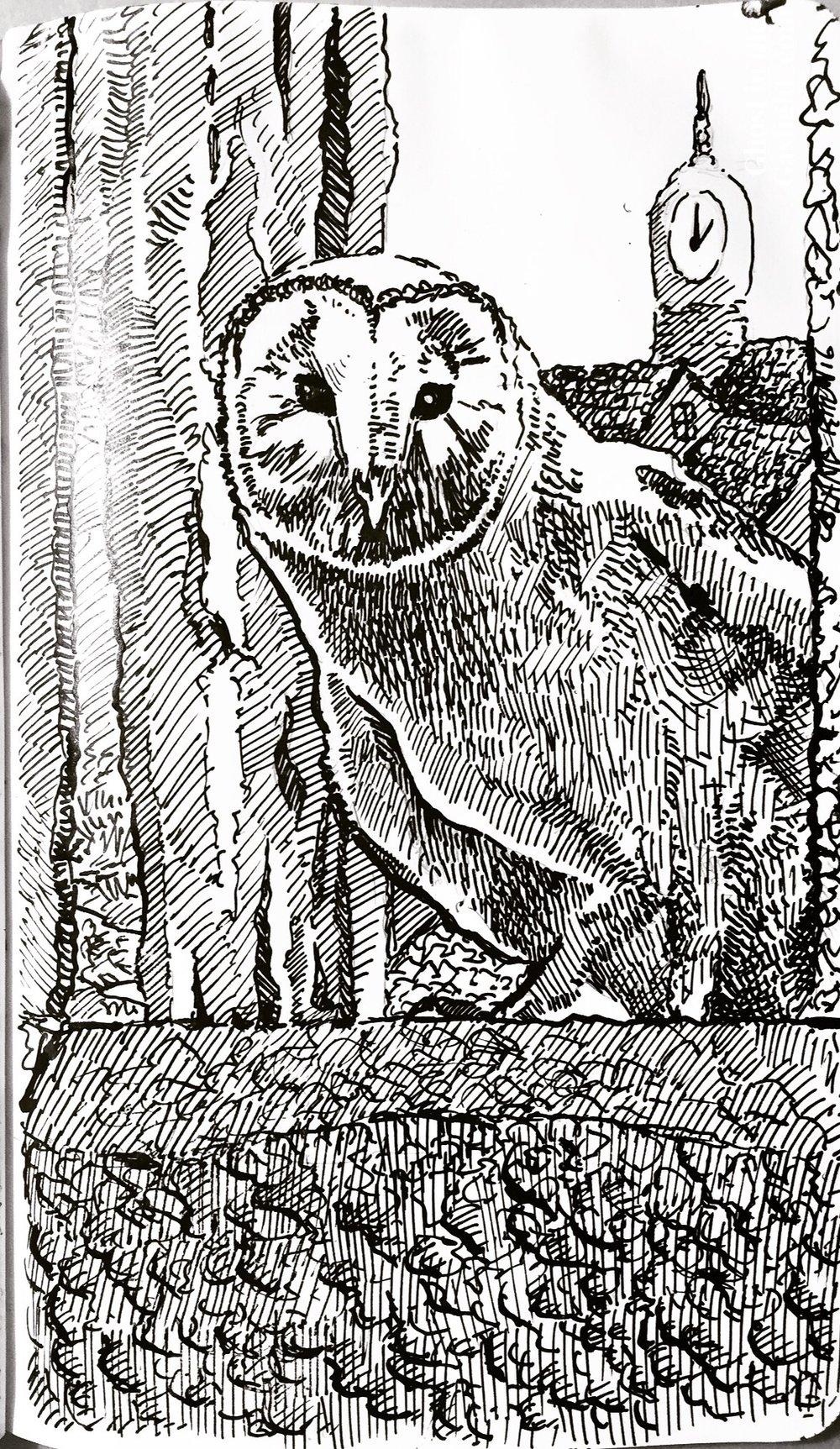 Day 15- Wishing Owl.jpg
