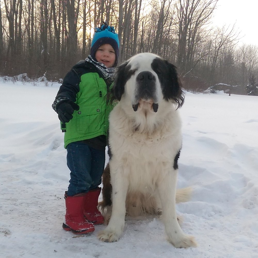 Our St. Bernard, HUmphrey, that we lost to bladder cancer last year. He was absolutely the best dog who ever lived.