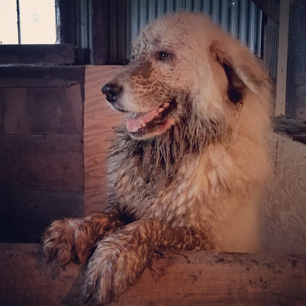 Why do pyrs have to love the mud so much?