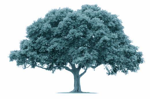 Tree is 30