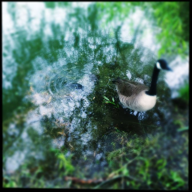 turtle pond 2