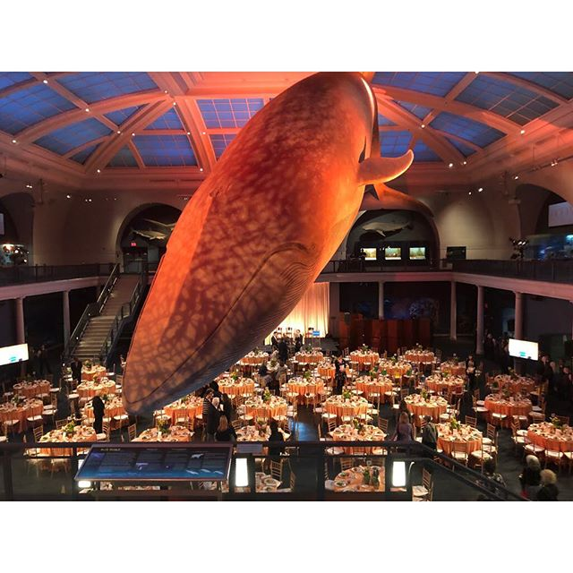 My very favorite whale. 🐳 #amnh