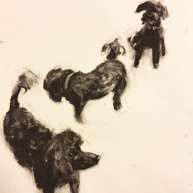 Berrie, Daisy and Molly. Charcoal on Stonehenge paper. 21 x 21cm approx.