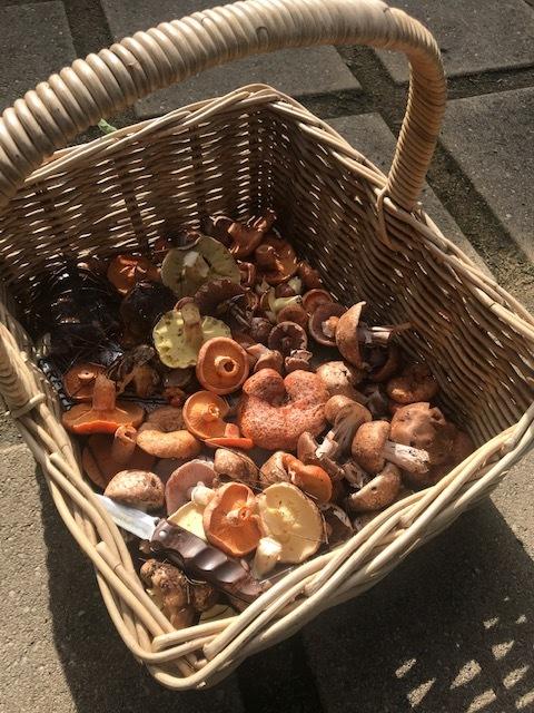 mushrooms-georgie-johnson-sherdale-farm-vineyard.JPG