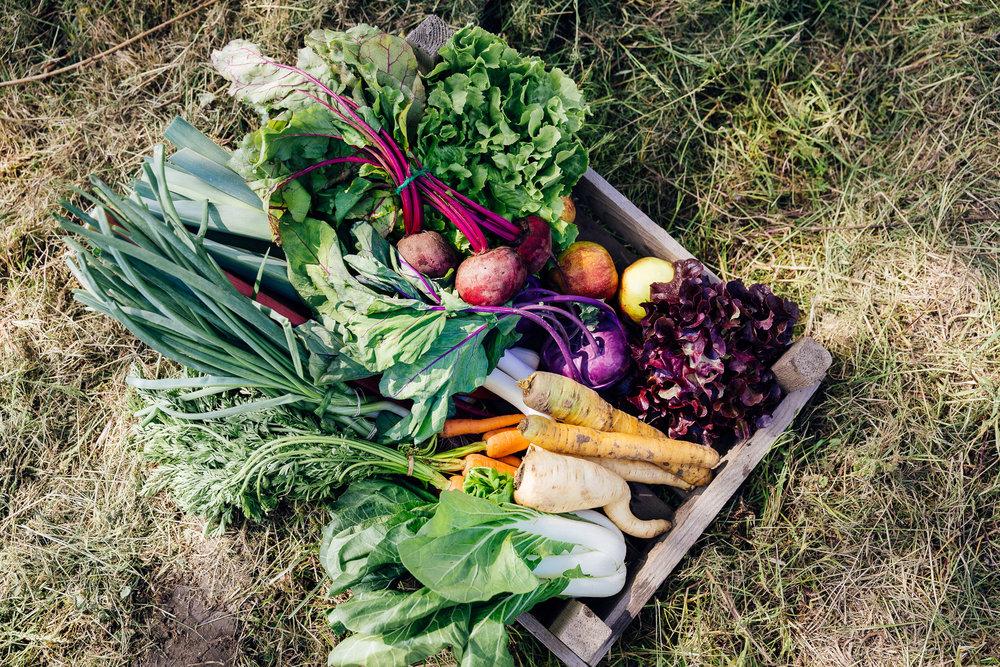Biologisch groentenpakket