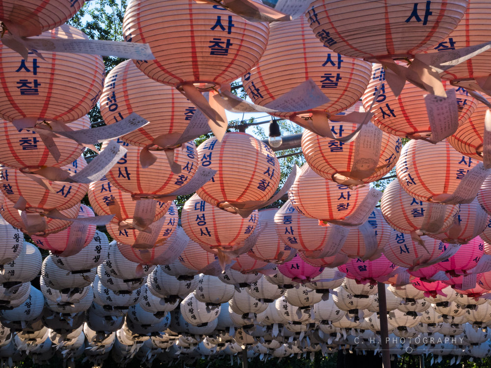 Pink Lanterns - Seoul, South Korea