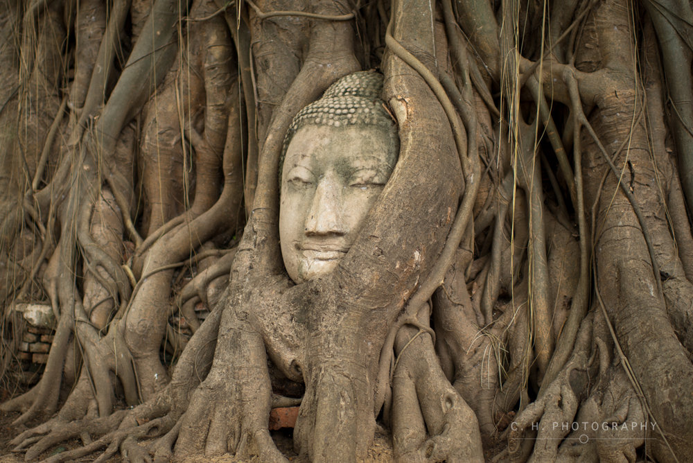 Buddha In Tree Roots - Ayutthaya, Thailand