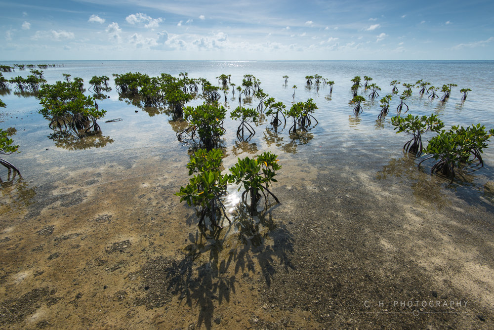 Mangrove Shallows - Cancun, Mexico
