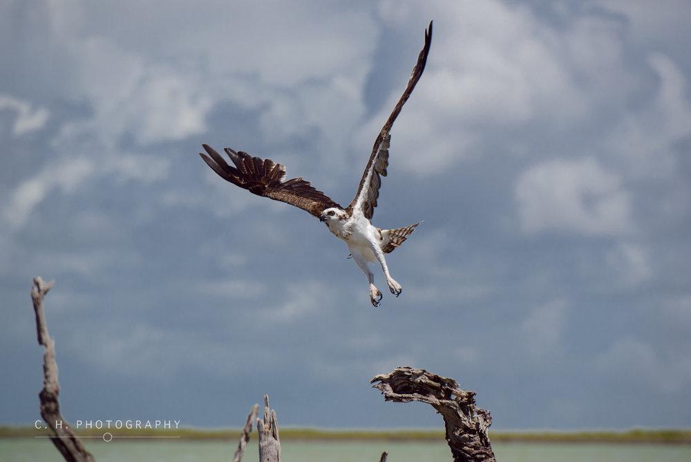 Sian-Ka'an - Quintana Roo