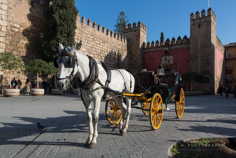 Horse & Alcazar