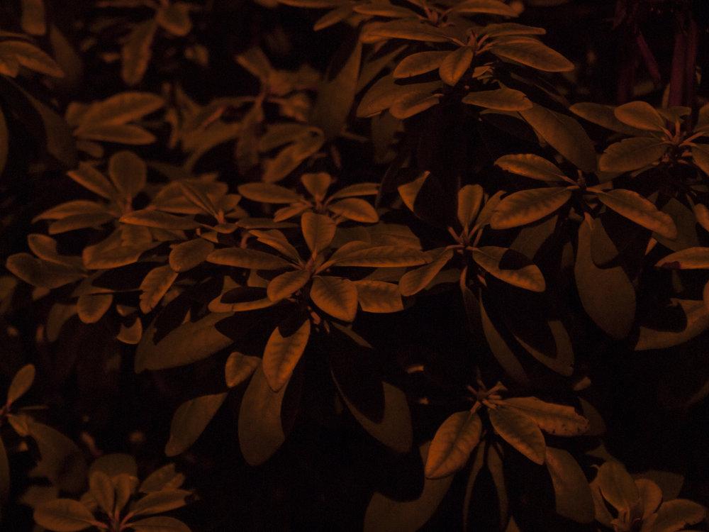 Tessa-van-Rijn-Glare030.jpg