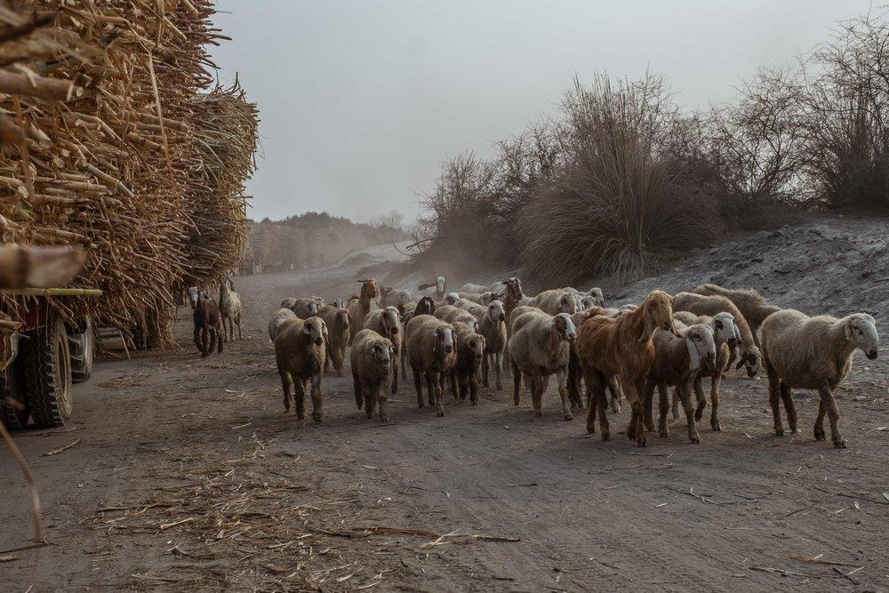 spo-Muzafargarh-Multan-Derawar476.jpg