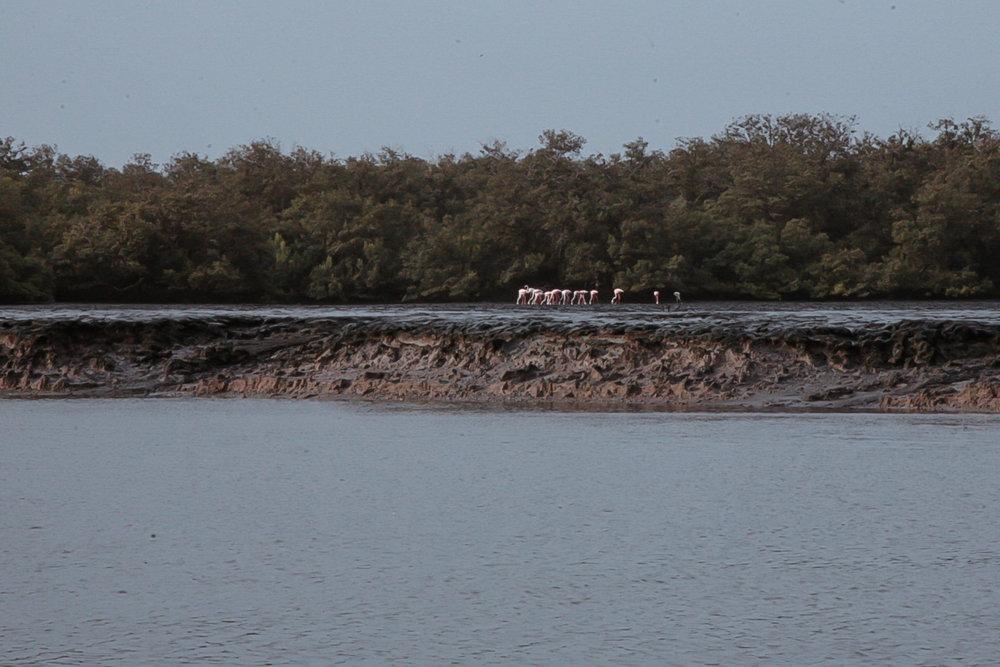 2012-01-mangrove-plantations-binqasim.jpg