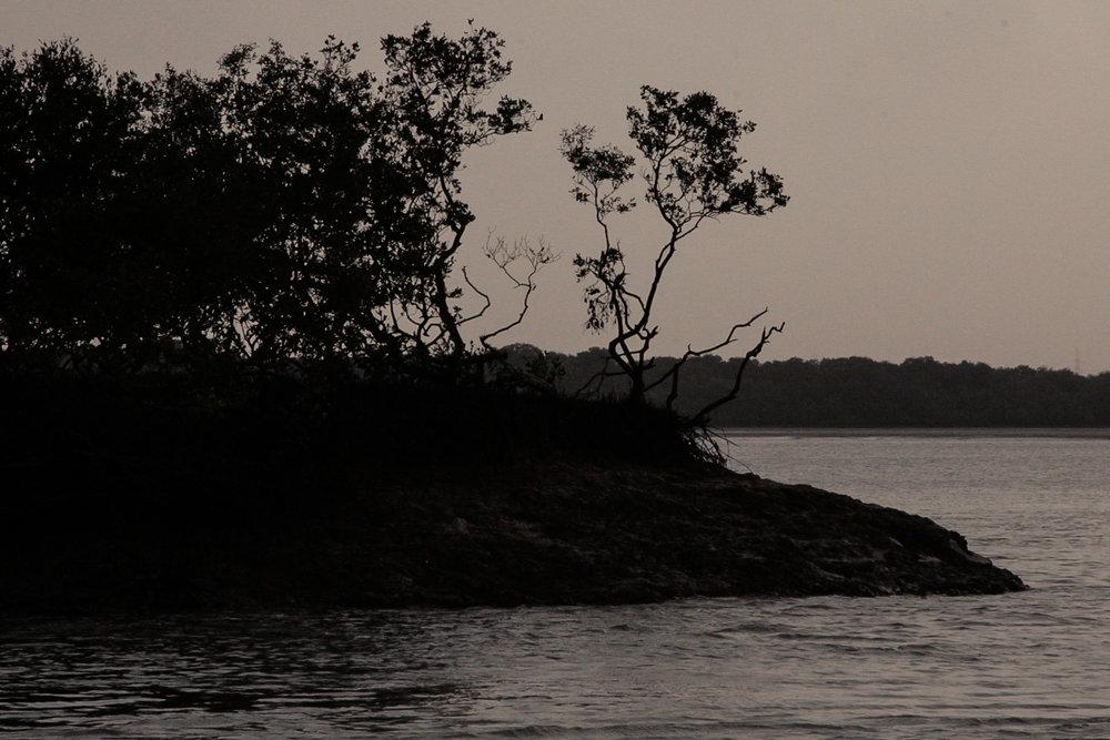 2012-04-mangrove-plantations-binqasim.jpg