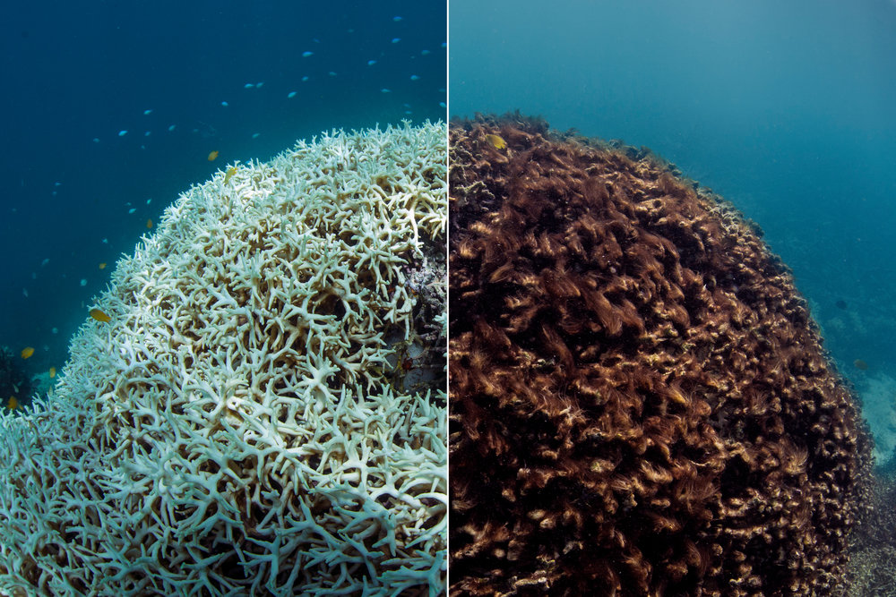 Photo Credit:The Ocean Agency - XL Catlin Seaview -Richard Vevers and Christophe Bailhache