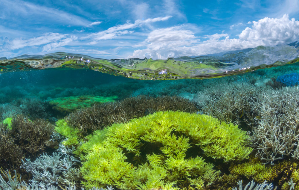 Photo Credit: The Ocean Agency -XL Catlin Seaview Survey -Richard Vevers