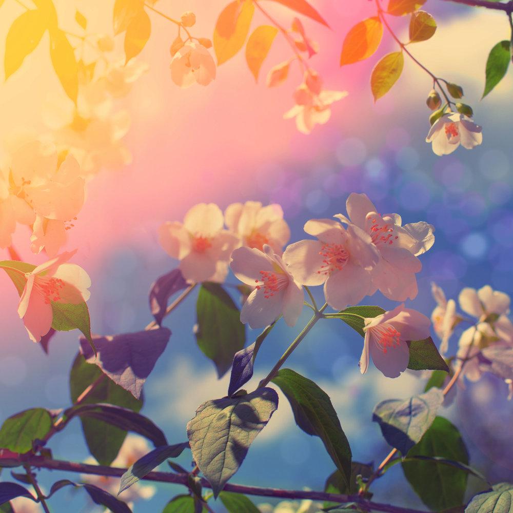 nature healing plants