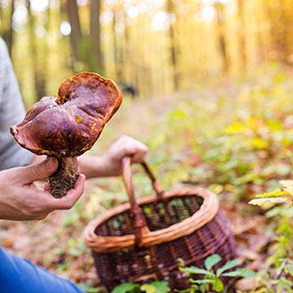 man-picking-mushrooms.jpg