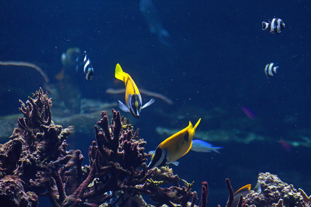 underwater-fishes-picture_zy-GgDFu.jpg
